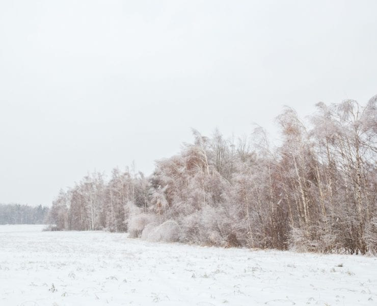 A snow covered field edge where the woods meets the open field.